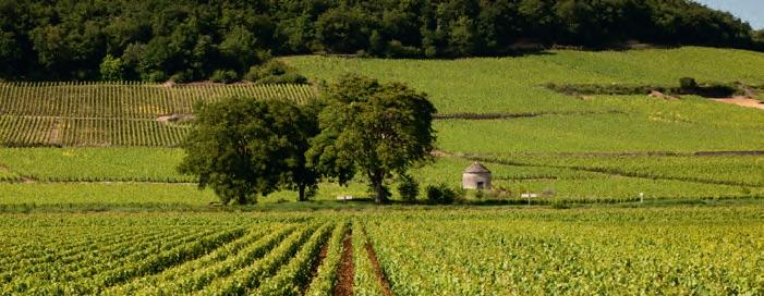 Beaune Burgundy Vineyards