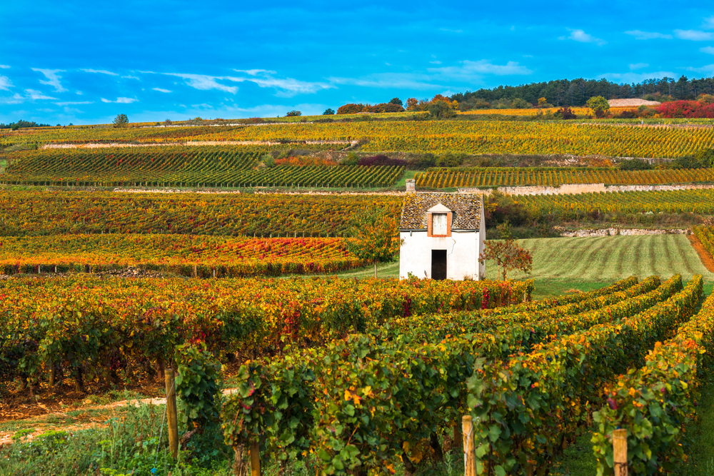 Vineyards-in-the-autumn-season-Burgundy-France